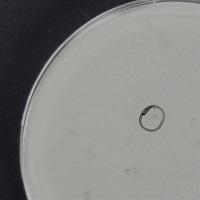 Infidel Plaque Picture